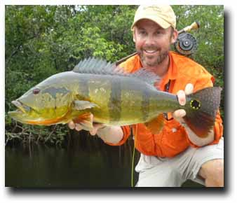 """Peacock Bass Fishing: """"Savage"""" describes these Brutes in the Amazon, Brazil"""