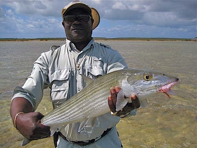 Winter Bonefish