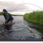 The Best Atlantic Salmon Fishing in 50 Years