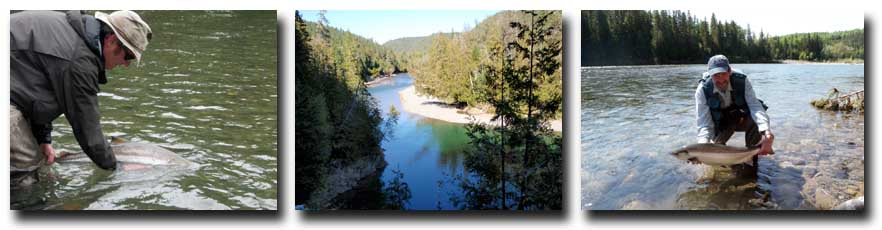L to R: Atlantic Salmon released back into the Bonaventure; Typical Quebec Salmon River; Gaspe Atlantic Salmon.