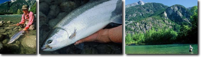 L-R: Dean River Steelhead being released, Nice British Columbia Steelhead; The Dean River.