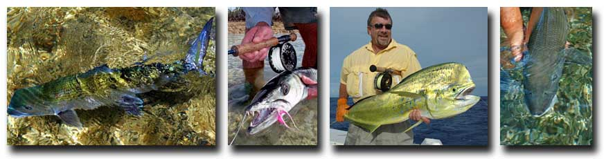 L-R: Cool Bonefish; Small Barracuda; H2O Bonefishing Offshore Fishing; Releasing a Bonefish