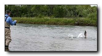 Fishing the Kanektok in Western Alaska
