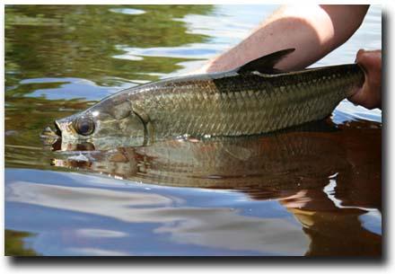 Pesca Maya Fishing Lodge