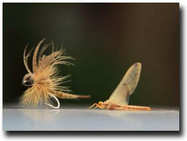 Natural and Immitation Dry Flies